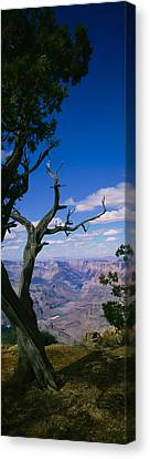 Close-up Of A Tree At The Edge Canvas Print by Panoramic Images