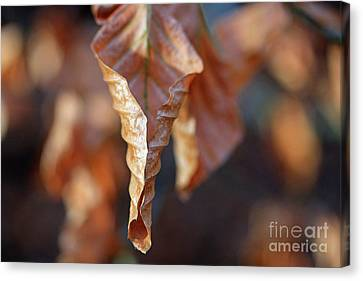Close-up Of Autumn Leaf Canvas Print