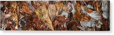Close-up Of Dead Leaves Canvas Print by Panoramic Images