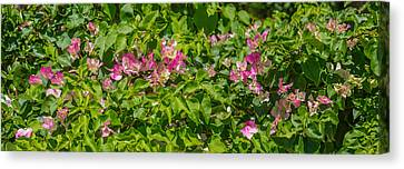 Close-up Of Flowers, Venice, Florida Canvas Print by Panoramic Images