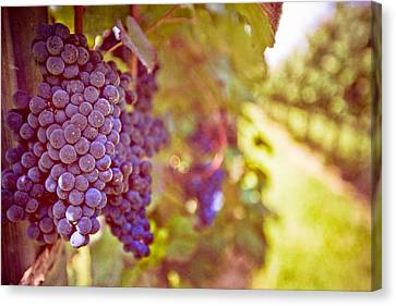 Close Up Of Grapes Canvas Print
