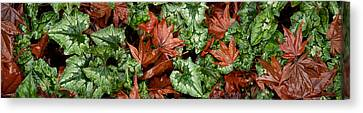 Close-up Of Green And Brown Leaves Canvas Print by Panoramic Images