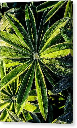 Nature Center Canvas Print - Close Up Of  Leafs by Tommytechno Sweden
