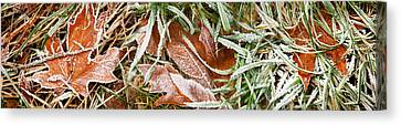 Close-up Of Maple Leaves Covered Canvas Print by Panoramic Images