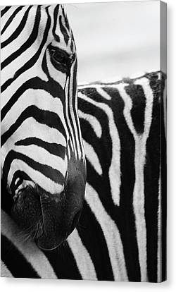 Close-up Of Zebra Face And Shoulder Canvas Print by George Jones