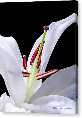 Canvas Print featuring the photograph Close-up Photograph Of A White Oriental  Lily by David Perry Lawrence