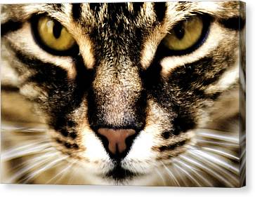 Close Up Shot Of A Cat Canvas Print by Fabrizio Troiani