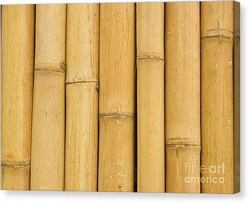 Closed Up Bamboo Background Canvas Print