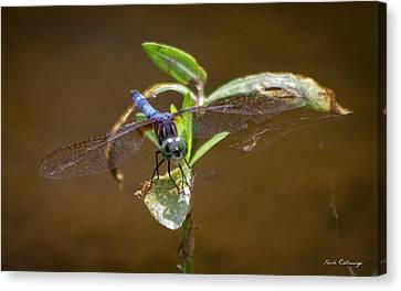 Dragonfly Eyes Canvas Print - Closeup Callaway Gardens Dragonfly Art by Reid Callaway