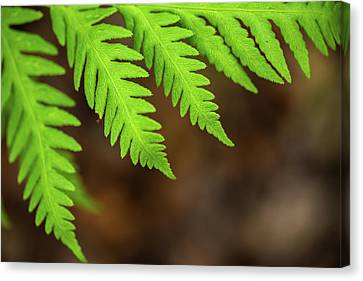 Canvas Print featuring the photograph Closeup Macro Of Green Leaves Show Textured Of The Organs With S by Jingjits Photography