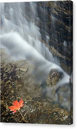 Closeup Maple Leaf And Decew Falls, St Canvas Print by Darwin Wiggett
