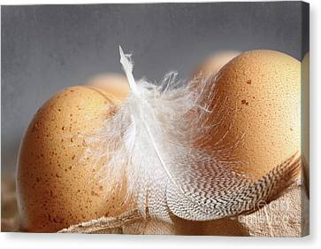 Closeup Of Brown Speckled Eggs  Canvas Print by Sandra Cunningham