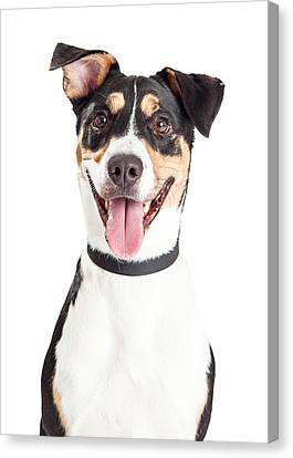 Closeup Of Happy Crossbreed Dog Mouth Open Canvas Print by Susan Schmitz