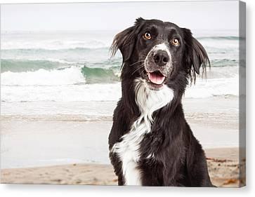 Closeup Of Happy Dog At Beach Canvas Print
