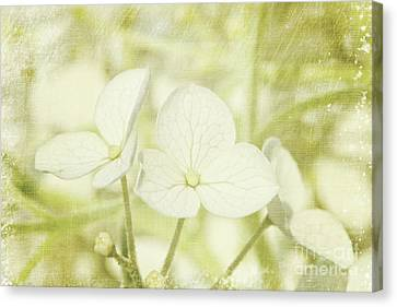 Closeup Of Hydrangea Flowers With Vintage Background Canvas Print by Sandra Cunningham