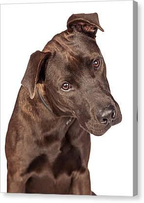 Closeup Of Labrador Crossbreed Dog Tilting Head Canvas Print