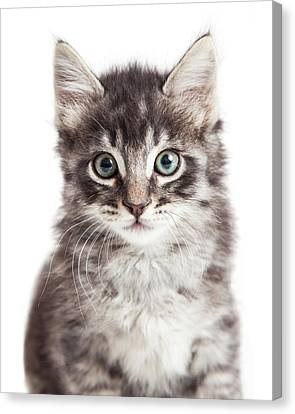 Closeup Portrait Black Tabby Kitten Canvas Print by Susan Schmitz