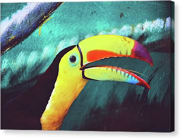 Srdjan Kirtic Canvas Print - Closeup Portrait Of A Colorful And Exotic Toucan Bird Against Blue Background Nicaragua by Srdjan Kirtic