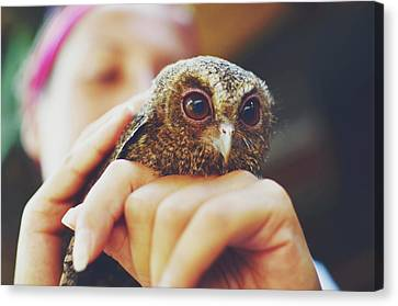 Closeup Portrait Of A Girl Holding And Tending A Small Baby Owl In Her Hands Canvas Print