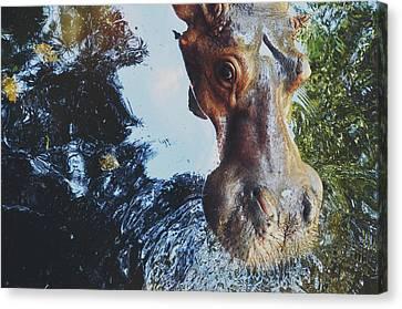 Srdjan Kirtic Canvas Print - Closeup Portrait Of A Hippo/hippopotamus Looking At The Camera by Srdjan Kirtic