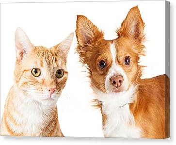 Closeup Small Dog And Tabby Cat Canvas Print by Susan Schmitz