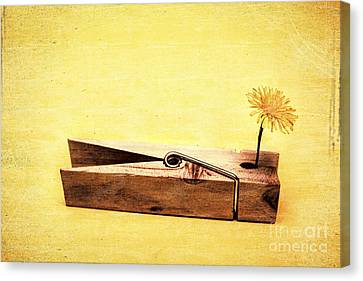 Clothespins And Dandelions Canvas Print