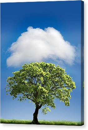 Cloud Cover Canvas Print by Mal Bray