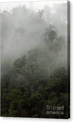 Cloud Forest Canvas Print by Kathy McClure