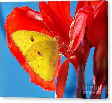 Cloudless Sulphur Butterfly Canvas Print