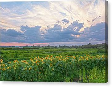 Clouds And Sunflowers Canvas Print