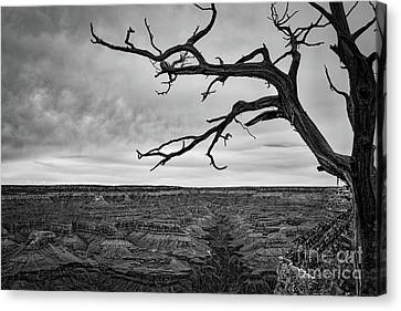 Gnarly Canvas Print - Clouds And The Canyon by Ana V Ramirez
