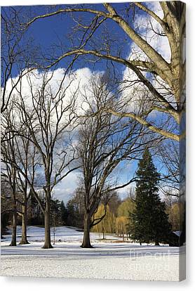 Clouds For Leaves Snow For Grass Canvas Print