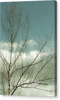 Canvas Print featuring the photograph Cloudy Blue Sky Through Tree Top No 1 by Ben and Raisa Gertsberg
