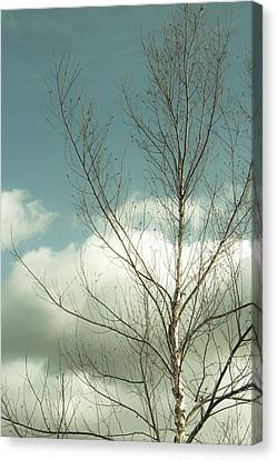 Canvas Print featuring the photograph Cloudy Blue Sky Through Tree Top No 2 by Ben and Raisa Gertsberg