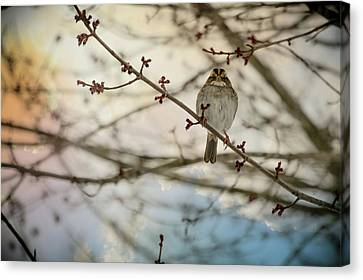 Canvas Print featuring the photograph Cloudy Finch by Trish Tritz