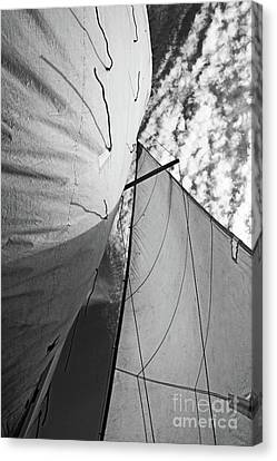 Cloudy Sky Seen Through Billowing White Sails Canvas Print by Sami Sarkis