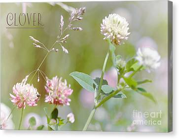 Clover Canvas Print by Elaine Manley