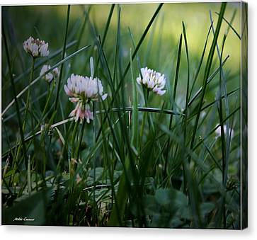 Clover Canvas Print by Mikki Cucuzzo