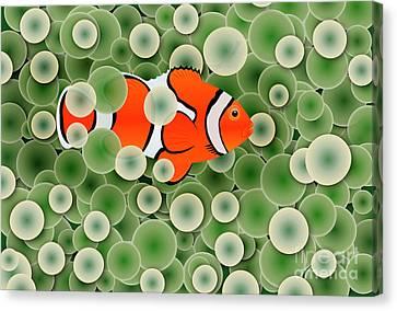 Clown Fish In Green Anemone Polyps Canvas Print by Michal Boubin