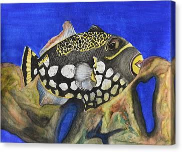 Clown Triggerfish Canvas Print
