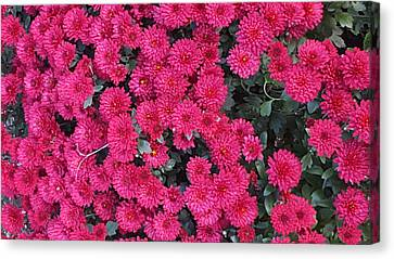 Cluster Red  Canvas Print by Peggy Chambers
