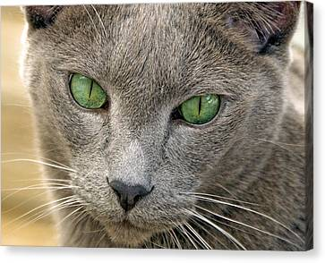 Clyde And His Green Eyes Canvas Print by James Steele