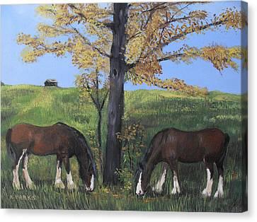 Clydesdale Feeding Canvas Print by Aleta Parks