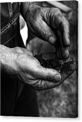 Coal Hands Canvas Print by Brian Mollenkopf