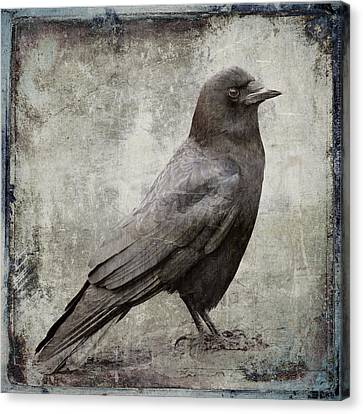 Coastal Crow Canvas Print by Carol Leigh