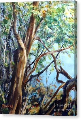Coastal Forest Canvas Print by Mary Lynne Powers