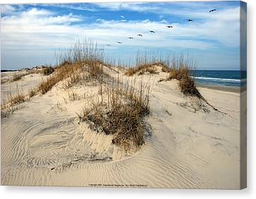 Coastal Formation Canvas Print by Kelvin Booker
