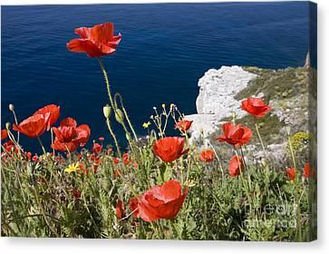 Greece Canvas Print - Coastal Poppies by Richard Garvey-Williams