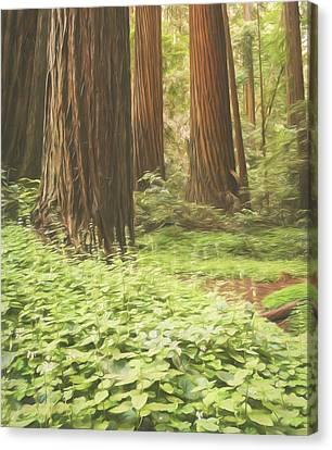 Canvas Print - Coastal Redwood Giants by Sheri Van Wert