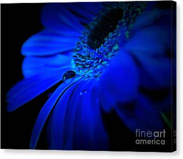 Cobalt Blues Canvas Print by Krissy Katsimbras